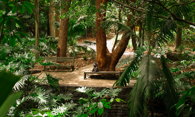 Exotic_rainforest (002)